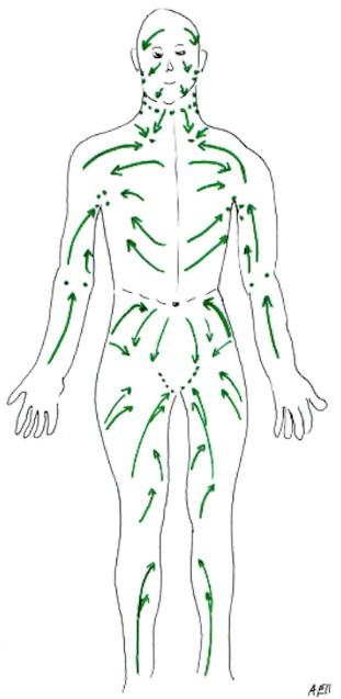Grafik der Lymphbahnen